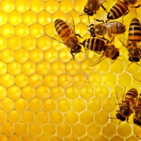 Move Over, Snail Slime; the New Magic Ingredient in Korean Skin Care Is Bee Glue, a.k.a. Propolis