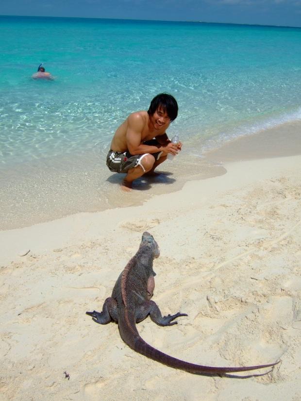 exuma iguanas